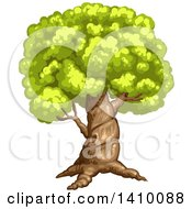 Clipart Of A Tree Royalty Free Vector Illustration by merlinul