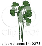 Clipart Of A Culinary Herb Spice Cilantro Royalty Free Vector Illustration
