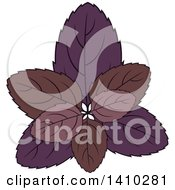 Clipart Of A Culinary Herb Spice Basil Royalty Free Vector Illustration
