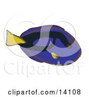 Regal Tang Fish Wildlife Clipart Illustration
