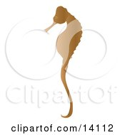 Gentle Brown Seahorse Wildlife Clipart Illustration
