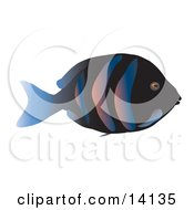 Tropical Fish With A Black Base Stripes And A Blue Tail Fin Wildlife Clipart Illustration