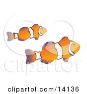 Pair Of Orange And White Clownfish Swimming Sea Life Clipart Illustration
