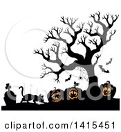 Cat With Lit Jackolanterns In A Cemetery With A Silhouetted Bare Tree