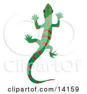 Green Gecko Lizard With Red Stripes And Patterns Over A White Background