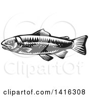 Clipart Of A Retro Black And White Woodcut Spotted Trout Fish Royalty Free Vector Illustration