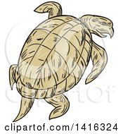 Clipart Of A Sketched Ridley Turtle Looking Back Royalty Free Vector Illustration by patrimonio