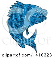 Clipart Of A Sketched Blue Sheepshead Fish Royalty Free Vector Illustration