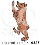 Clipart Of A Sketched Rampant American Black Bear Royalty Free Vector Illustration