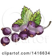 Clipart Of Sketched Black Currants Royalty Free Vector Illustration by Vector Tradition SM