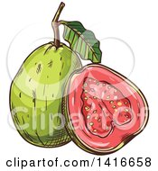 Clipart Of A Sketched Guava Royalty Free Vector Illustration