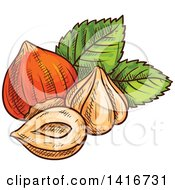 Clipart Of Sketched Hazelnuts Royalty Free Vector Illustration