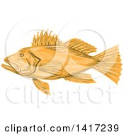 Clipart Of A Sketched Black Sea Bass Fish Royalty Free Vector Illustration