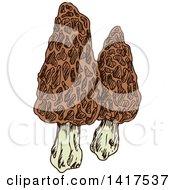 Clipart Of Sketched Morel Mushrooms Royalty Free Vector Illustration