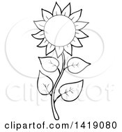 Clipart Of A Black And White Lineart Sunflower Royalty Free Vector Illustration by visekart