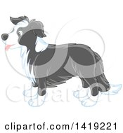 Cute Gray And White Border Collie Dog In Profile