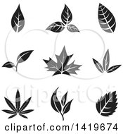 Clipart Of Black And White Leaves Royalty Free Vector Illustration by cidepix