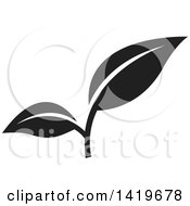 Clipart Of Black And White Plant Leaves Royalty Free Vector Illustration by cidepix