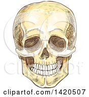 Poster, Art Print Of Sketched And Color Filled Human Skull