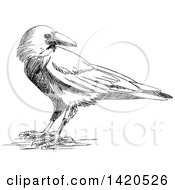 Clipart Of A Sketched Black And White Crow Royalty Free Vector Illustration