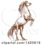 Clipart Of A Sketched Brown Horse Rearing Royalty Free Vector Illustration