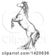 Clipart Of A Sketched Gray Horse Rearing Royalty Free Vector Illustration