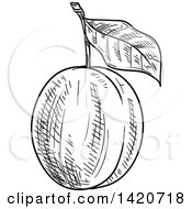 Clipart Of A Black And White Sketched Plum Or Apricot Royalty Free Vector Illustration