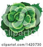 Clipart Of A Head Of Batavia Lettuce Royalty Free Vector Illustration by Seamartini Graphics