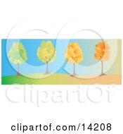 Series Of The Same Tree Changing From Summer To Fall With Autumn Foliage Clipart Illustration