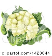 Clipart Of A Head Of Cauliflower Royalty Free Vector Illustration