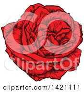 Sketched Red Rose Flower