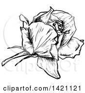 Sketched Black And White Rose
