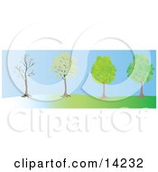 The Same Tree In The Winter Spring And Summer Seasons Clipart Illustration