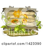 Wooden Plaque Or Sign Behind Daisy Flowers