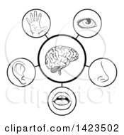 Clipart Of A Black And White Diagram Of The 5 Senses Royalty Free Vector Illustration