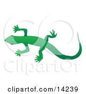 Solid Green Gecko Lizard Over A White Background