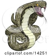 Vemomous And Defensive Green Cobra Snake Preparing To Attack Clipart Illustration