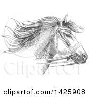 Sketched Gray Horse Head Wearing A Bridle