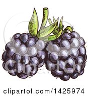 Clipart Of Sketched Blackberries Royalty Free Vector Illustration