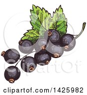 Clipart Of Sketched Black Currants Royalty Free Vector Illustration