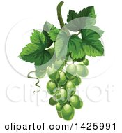 Clipart Of A Bunch Of Green Grapes And Leaveslogo Royalty Free Vector Illustration