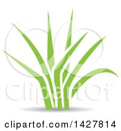 Clipart Of Green Grass With A Shadow Royalty Free Vector Illustration by cidepix