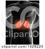 3d Anatomical Xray Man With Glowing Red Kidneys On Black