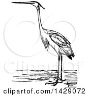 Clipart Of A Vintage Black And White Heron Bird Royalty Free Vector Illustration