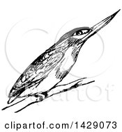 Clipart Of A Vintage Black And White Kingfisher Bird Royalty Free Vector Illustration