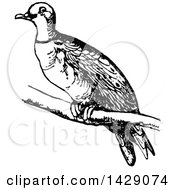 Clipart Of A Vintage Black And White Bird Royalty Free Vector Illustration