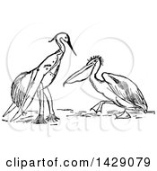 Clipart Of A Vintage Black And White Perched Stork Dressed In Clothes And Pelican Royalty Free Vector Illustration