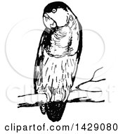 Clipart Of A Vintage Black And White Perched Parrot Royalty Free Vector Illustration