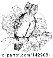 Clipart Of A Vintage Black And White Sketched Perched Owl Royalty Free Vector Illustration