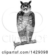 Clipart Of A Vintage Black And White Sketched Owl Royalty Free Vector Illustration by Prawny Vintage